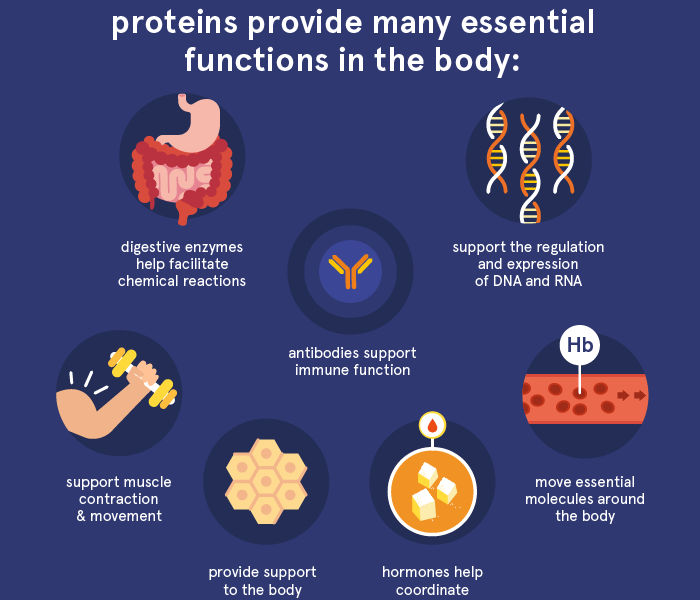 Role of Proteins in Human Body
