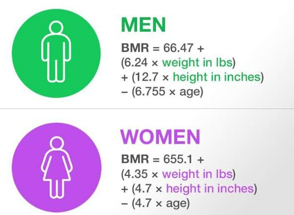 What is BMR | How to check your BMR